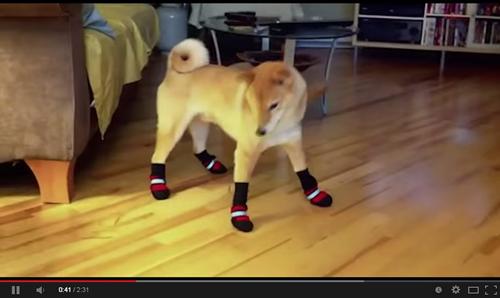 dog-leg001